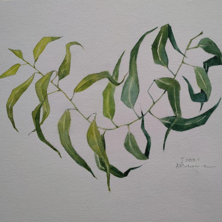 Eukaliptusowe serce